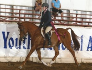 All Aflame Youth 2012 Sport Horse